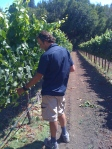 Keith Hock, Schramsberg Winemaker checking the Pinot in Keefer Vineyards, Green Valley