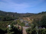 Benziger Family Winery Bloggers Visit